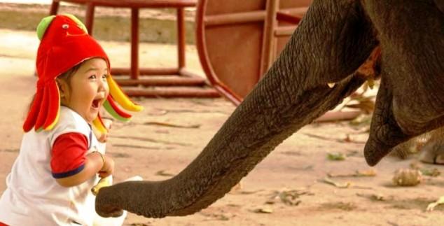 Thailändisches Kind mit einem Elefanten