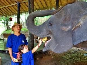 Chiang Mai Elefanten kennen lernen