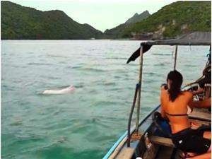 Khanom: Ausflug zu den pinken Delfinen
