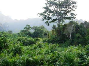 Ausblick auf den Dschungel im Khao Sok Nationalpark