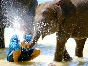 Elefant spritzt Wasser in Begleitung von seinem Mahout