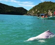 Delfine am Khanom Beach