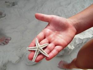 Seestern in einer Hand