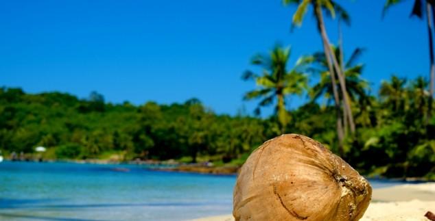 Kokusnuss am Strand in Thailand