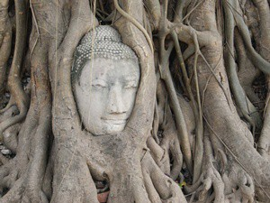 In Ayutthaya im Wat Mahatat kann man den eingewachsenen Buddhakopf im Baum sehen