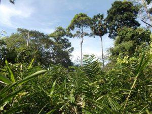 Dichter, grüner Dschungel im Khao Yai Nationalpark
