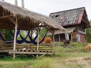Sie besuchen ein typisch laotisches Dorf