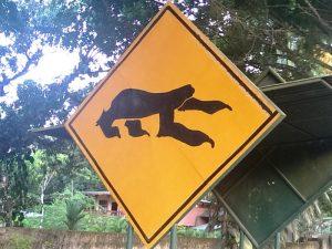 Bribri Costa Rica: Schild Faultiere