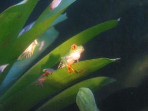 Ein grüner Frosch im Dickicht