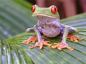Grüner Frosch sitzt auf einem Blatt