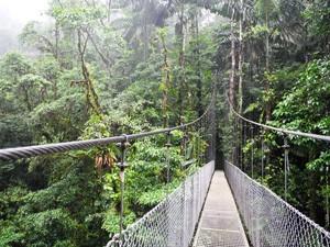 Costa Rica Rundreise mit Kindern: Hängebrücke in La Fortuna