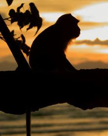 Ein Affe am Strand von Manuel Antonio