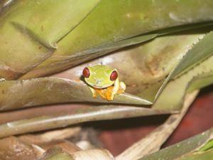 Ein kleiner Frosch auf einem Blatt