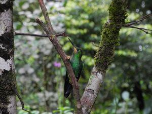 Ein Kolibri sitzt im Baum
