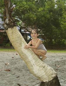 Ein Mädchen klettert auf eine Palme