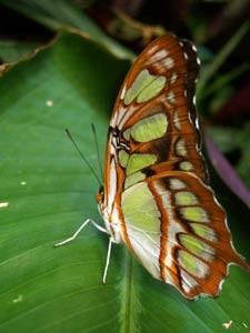 Schmetterling Grossaufnahme
