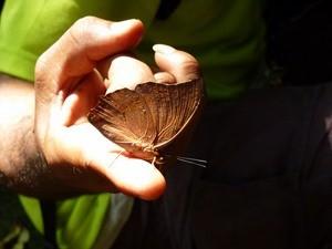 Schmetterlin ist auf Finger gelandet