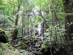 Ein Wasserfall im Rincon Nationalpark