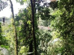 Mit der Familie den Regenwald Costa Ricas entdecken
