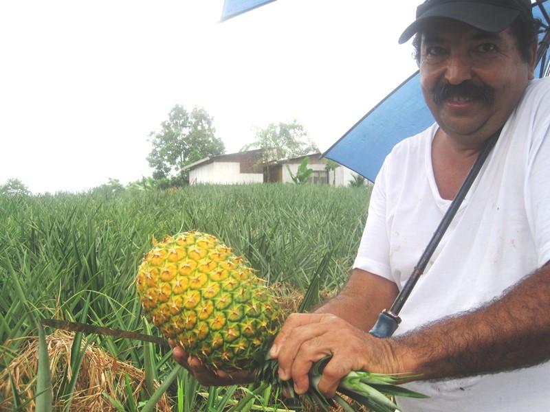 Mann schneidet Ananas an