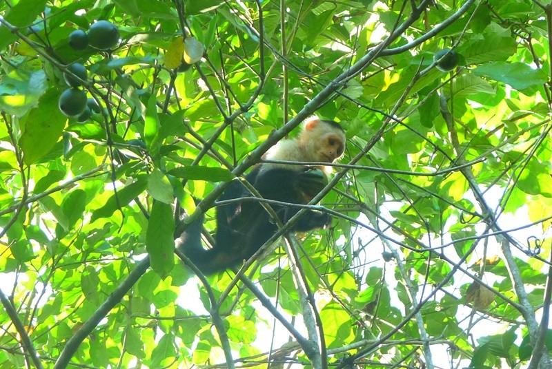Ein kleiner Affe sitzt im Baum