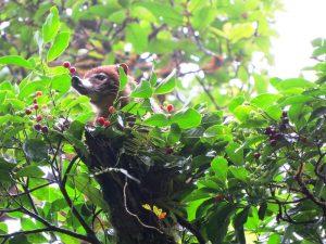 Tiere in Monteverde