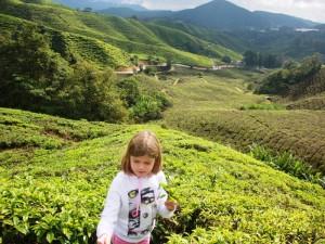 Ein Mädchen in den Teefeldern