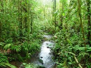 Rio Celeste im Tenorio Nationalpark