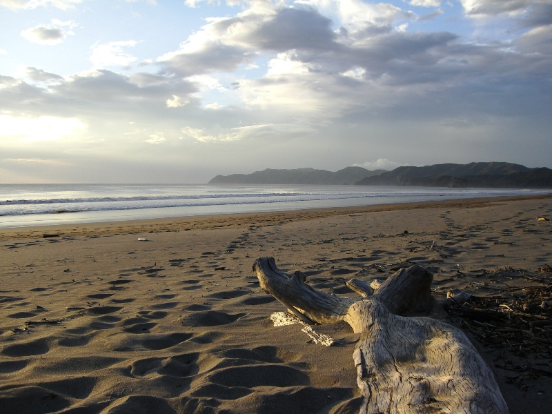 Ein Baumstamm am Strand
