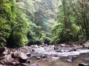 Dschungel in Uvita