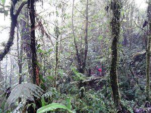 Besuch des Regenwalds