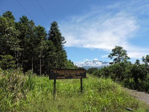 Waldlandschaft bei Turrialba