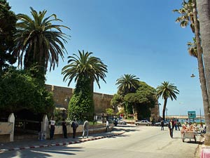 palmengesäumte Straße in Asilah