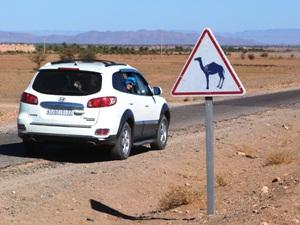 Mietwagen vor Schild mit Kamel
