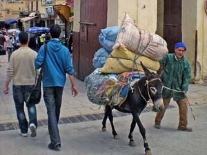 Königsstädte Marokko - Esel in der Medina von Fes