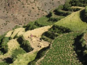 Blick-auf-Terrassenfelder-beim-Wandern-in-Marokko