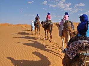 kamel-wueste-marokko-highlights