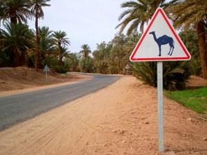 """Straßenschild """"Vorsicht Kamele!"""""""