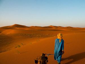 Eine Woche Marokko - Sahara Kamel