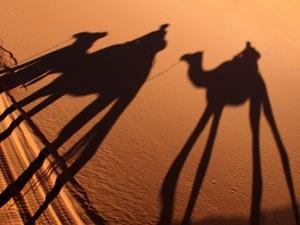 Marokko Rundreise - Kamel Schatten in der Wüste