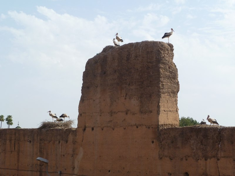 stoerche-marrakesch (Kopie)