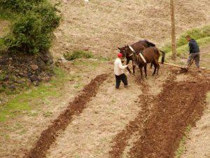 Bauern bei Imlil im Atlasgebirge in Marokko