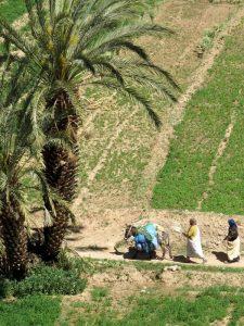 marokko-palmengarten-frauen-esel