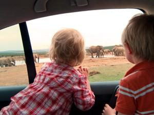 Garden Route mit Kindern: Kinder auf Safari im Mietwagen vor einer Elefantenherde
