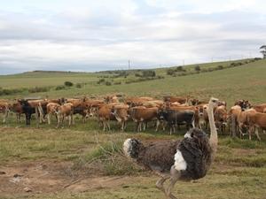 Entdecken Sie die Tiere auf der Farm