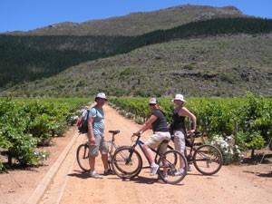 Südafrika Rundreise mit Kindern: Reisende beim Fahrradausflug durch die Weinberge in Stellenbosch