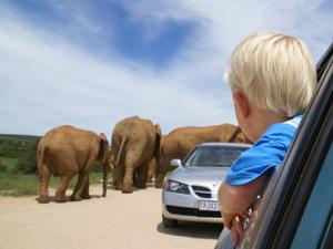 Kind im Auto bei der Selbstfahrertour durch den Addo