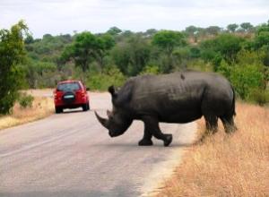 Nashorn auf Selbstfahrersafari