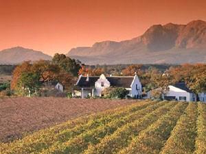 Weinberge bei Stellenbosch in der Abenddämmerung