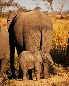 Südafrika Rundreise: Eine Elefantenfamilie